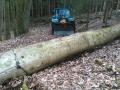 Baum-zum-Tisch-2-gefällter-Baum