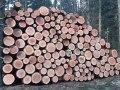 Stammholz-Wald-Hirnholz-20210328_092016