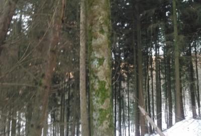 """""""Ein nach Maß gefertigter Tisch aus einem eigenen Baum"""", macht ihr so was auch? - Schreinerei, Möbel, individuell, hochwertig, Rein-Main-Neckar-Kreis"""
